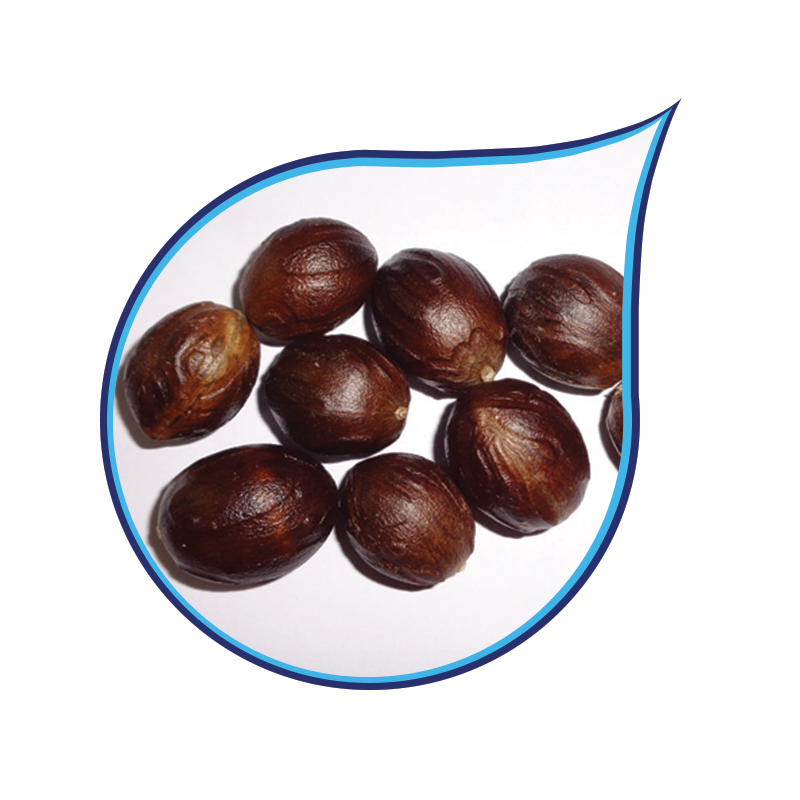Whole Nutmeg With Shell
